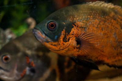 Aquarium-0006