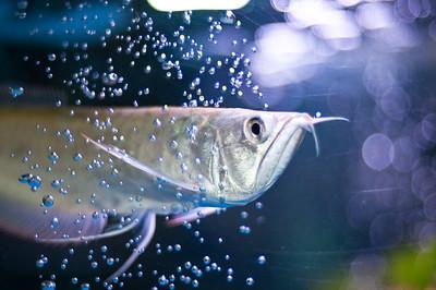 Aquarium-0002