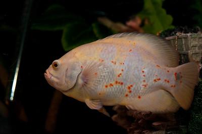 Aquarium-0003