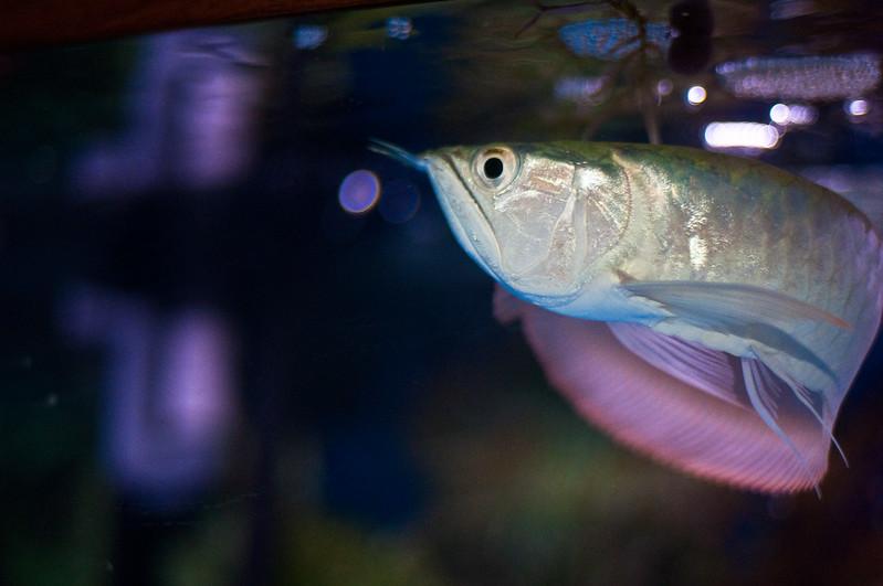 Aquarium-0001