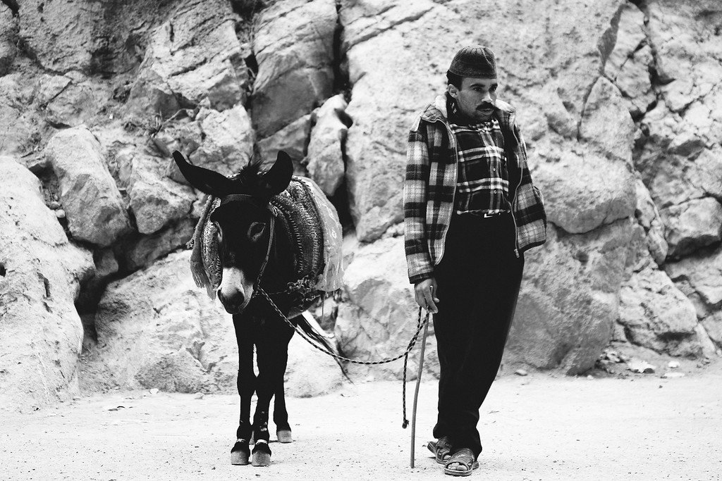 The Donkey and his Master