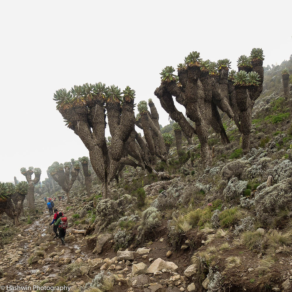 Kilimanjaro hike - day 4