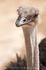 SA Zoo_05-2009  052