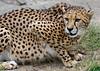 SA Zoo_20120115  008