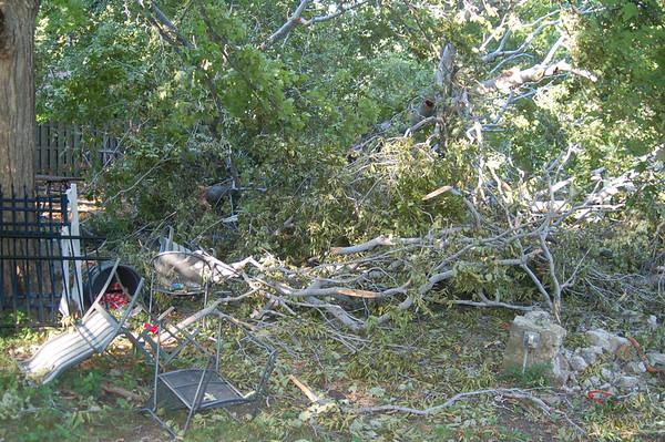 Beech Tree Down 09