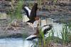 SPI Birding Ctr_20120724  045