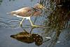 SPI Birding Ctr_20120724  022