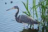 SPI Birding Ctr_20120724  049