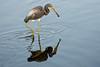 SPI Birding Ctr_20120724  026