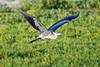 SPI Birding Ctr_20120724  020