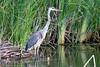 SPI Birding Ctr_20120724  035