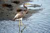 SPI Birding Ctr_20120724  023