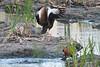 SPI Birding Ctr_20120724  046