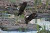 SPI Birding Ctr_20120724  044