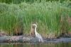 SPI Birding Ctr_20120724  030