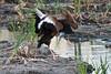 SPI Birding Ctr_20120724  048