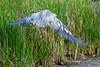 SPI Birding Ctr_20120724  033
