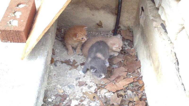 Kittens iPhone Video_20120416-2
