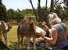 Camels_20150802  001