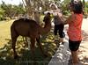 Camels_20150802  012