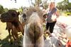 Camels_20150802  018