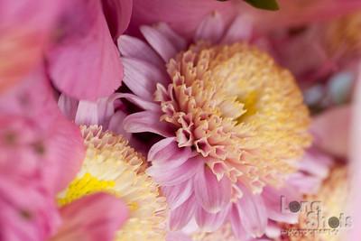 20090618-flowers-112