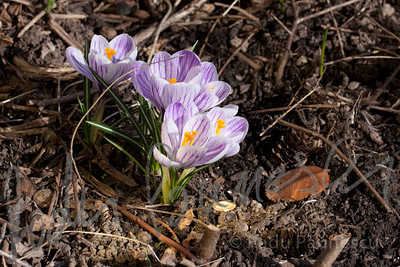 Spring Flowers-5745