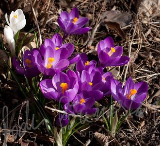 Spring Flowers-5750