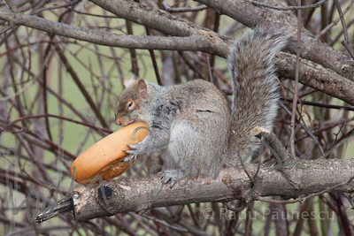 Big-Lunch-1334