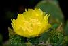 Cactus Flower  007
