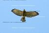 Smith Point Hawk Watch_2007  028