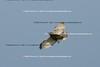 Smith Point Hawk Watch_2007  029