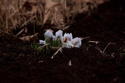 20090316-spring-151