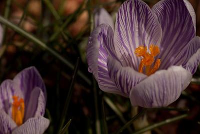 20090327-spring-119