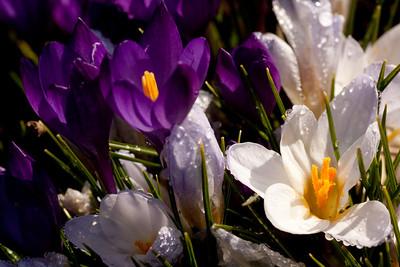 20090327-spring-103