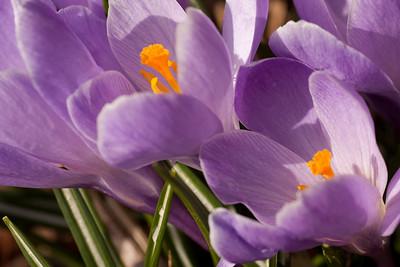 20090327-spring-121