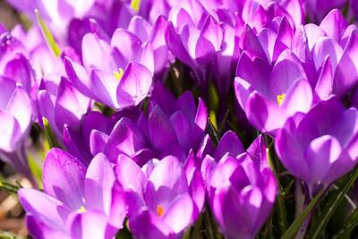 20090327-spring-102