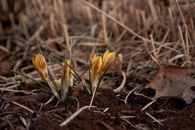20090318-spring-163