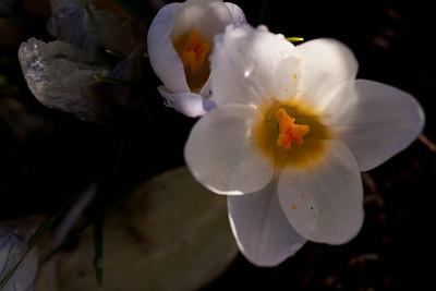 20090327-spring-104