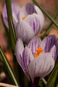 20090327-spring-120