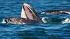 Whales_Humpback_2010910  066