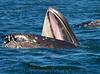 Whales_Humpback_2010910  065