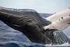 Whales-Maui_20150123  017