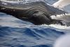 Whales-Maui_20150123  018
