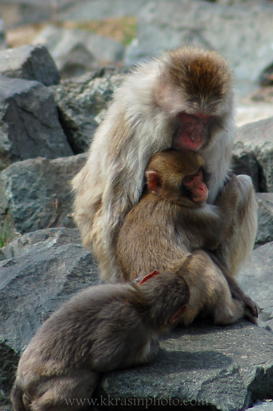 A cuddly monkey family