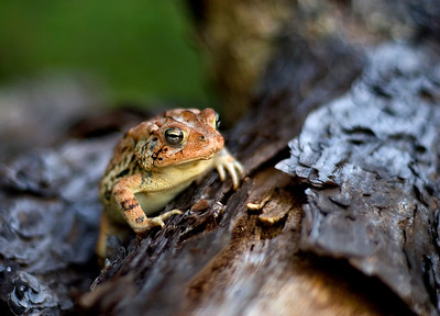 Toad - Biloxi, MS