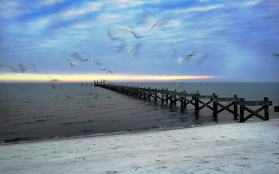 Gulls Leave Brushstrokes - Biloxi Beach, MS
