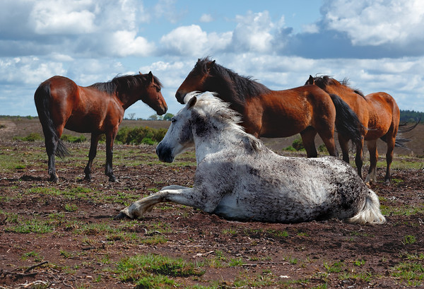 Horse playing in Dirt
