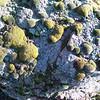 cool moss