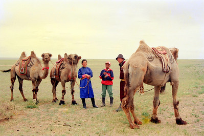 While in the Gobi Desert, rode on the Mongolian horses and camels. Learnt that the Mongolian camels are single humped.